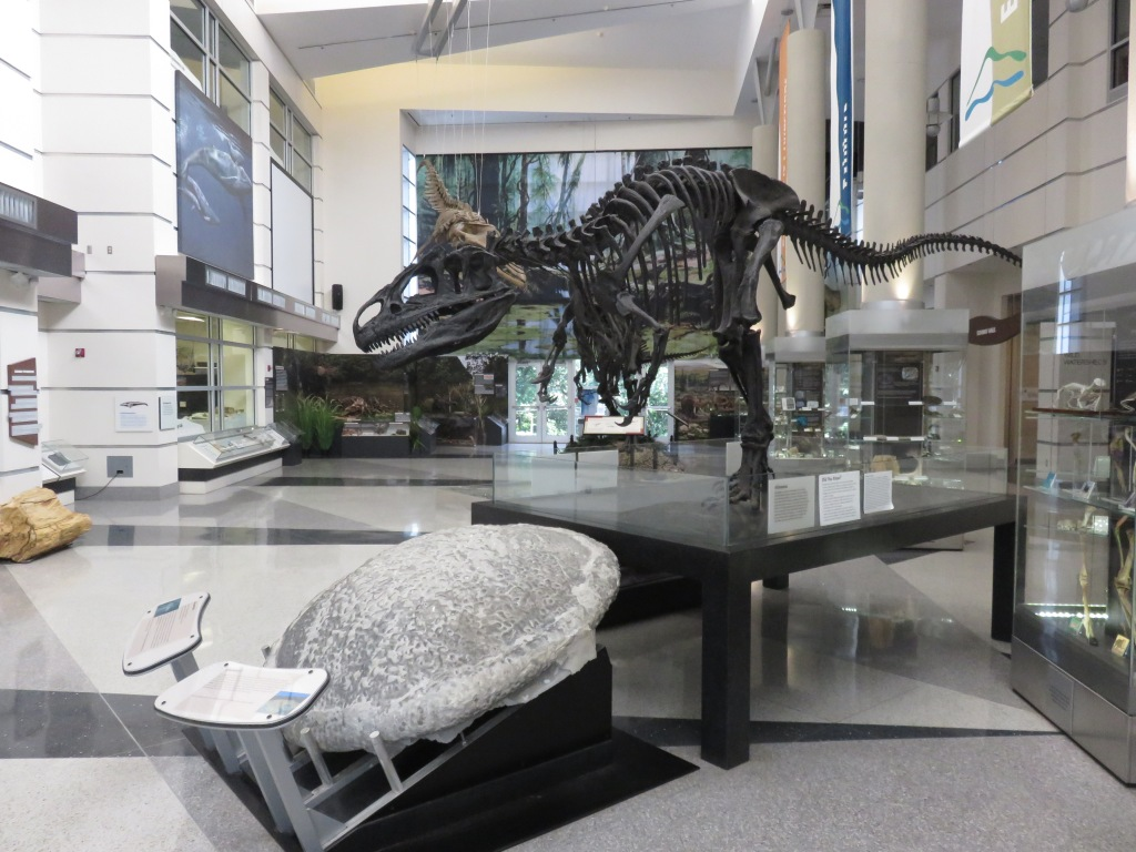 image inside Virginia Museum of Natural History showing a t-rex skeleton overlooking a large stromatolite